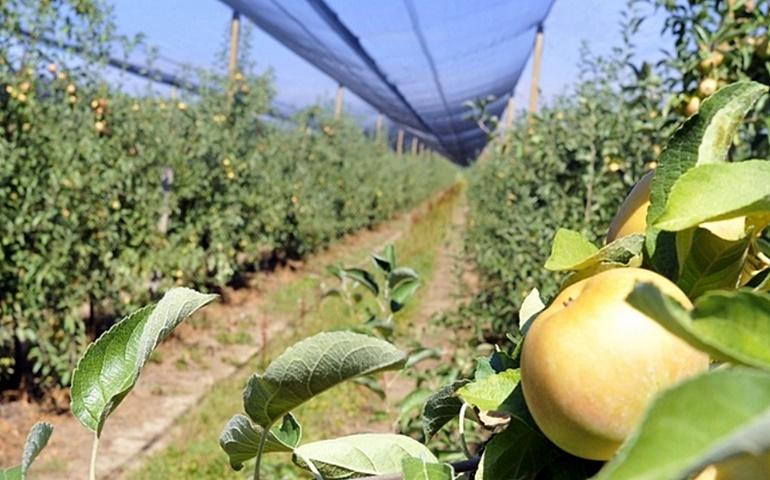Nova kreditna linija ZABE za poljoprivrednike